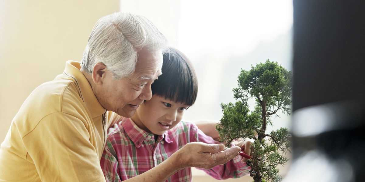 A grandfather teaching his grandson how to trim a bonsai