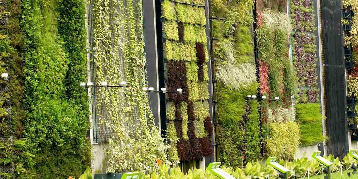 A wall of plants at Hort Park