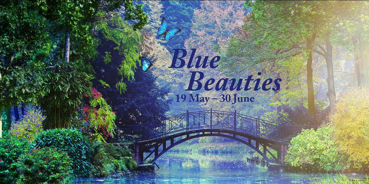 gardens by the bay presents blue beauties